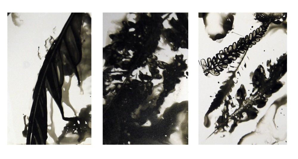 Deema Chemigrams taken from nature.jpg